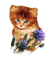 Orange Kitten/Blue Flowers