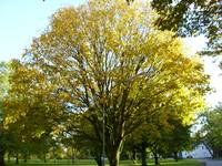nature, city park, landscape, trees, autumn