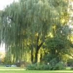"""""""nature, city park, landscape, trees, autumn"""" by Marija4"""