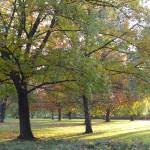 """nature, city park, landscape, trees, autumn"" by Marija4"