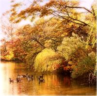 Autumn at the Pond 2010
