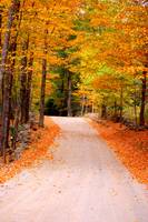 Autumn on a Dirt Road in New England