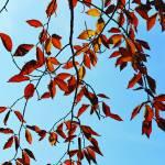 """Fall Leaves"" by saraalexandermunoz"