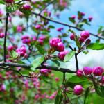 """Spring Blossoms"" by saraalexandermunoz"