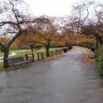 """""""Path to Autumn"""" by FlashyFay"""