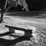 """Ironwood and Stone Bench"" by earthtoholly"
