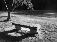 Ironwood and Stone Bench