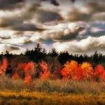 """Abstract Of Francestown New Hampshire Landscape"" by bavosiphotoart"