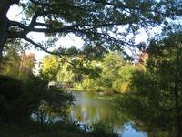 The Pond at Tanglewood