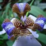 """""""Orquidea"""" by rscsales"""