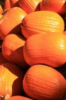 Pick a Plump Pumpkin 6227