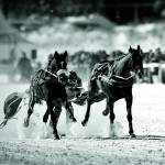 """White Turf Races of St. Moritz"" by johnmiddlebrook"