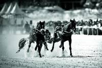 White Turf Races of St. Moritz