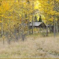 Ashcroft ~ Colorado Ghost Town Art Prints & Posters by Patty Panella