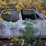 """Car in Kudzu"" by LauraMoyer"