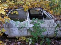 Car in Kudzu