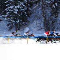 Horses Race at White Turf Art Prints & Posters by John Middlebrook