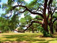 Oakland Creole Plantation grounds 01