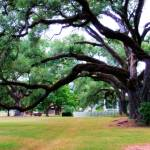 """Oakland Creole Plantation grounds 06"" by Cynthia_Burkhardt"