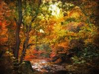 Autumn River View