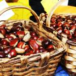 """""""Baskets of chestnuts"""" by CarrieWaters"""