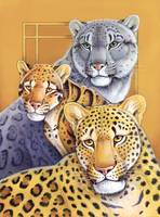 Leopards - Snow, Clouded, Golden Leopards