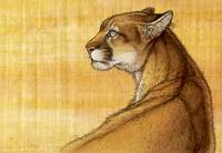 Sonora - Mountain Lion