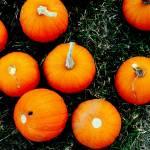 """""""The Littlest Pumpkins"""" by SavingFLorida"""