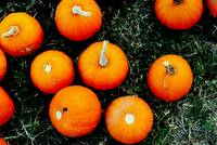 The Littlest Pumpkins