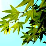 """""""Leaves"""" by aviaperture"""