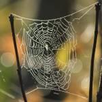"""The Web"" by karolsstuff"
