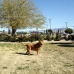 """""""Buddy in Arizona"""" by arag"""