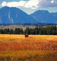 Horse in Grand Teton National Park