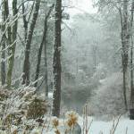 """""""Snow Comes to the Little Pond"""" by RickTodaro"""