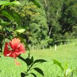 """""""Red Flower in La Joya"""" by gmhharden"""