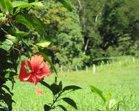 Red Flower in La Joya