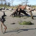 """Alien driftwood"" by kat7195"