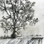 """Poplar Tree In Autumn Ink Drawing by Ginette"" by GinetteCallaway"