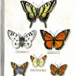 """""""Butterfly Collection #1"""" by revelation_art_studio"""