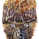 """Non Typical White Tailed Deer"" by RCMcSpaddenArtStudio"