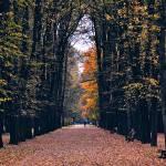 """""""fall"""" by petrkasparek"""