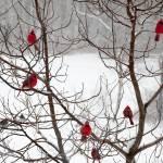 """Wild Birds in Winter"" by ThisBoyGallery"