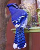 Mr. Blue Jay at the Bird Feeder