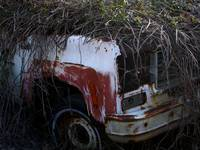 Truck With Kudzu