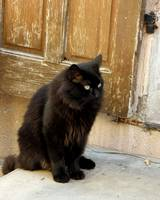 Black Cat on Step