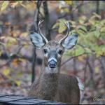 """First Buck of the Season"" by GlendaBorchelt"