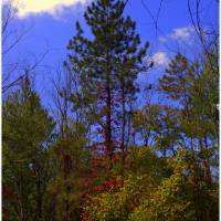 A Bit of Red in the Forest Art Prints & Posters by Melinda Newman