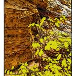 """""""Ledges in the Fall"""" by jbjoani2"""