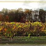 """Ohio Winery in Autumn"" by jbjoani2"