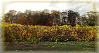Ohio Winery in Autumn